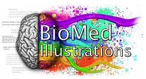 BioMed Illustrations